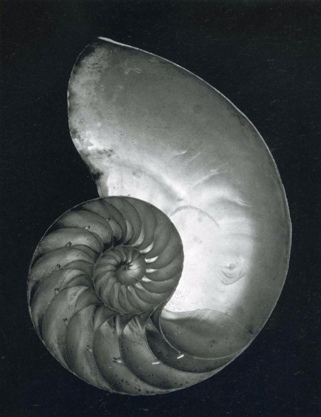 Nautilus Sophia Dinola
